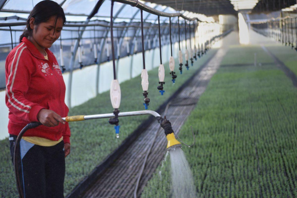 Gestion de risques agricoles