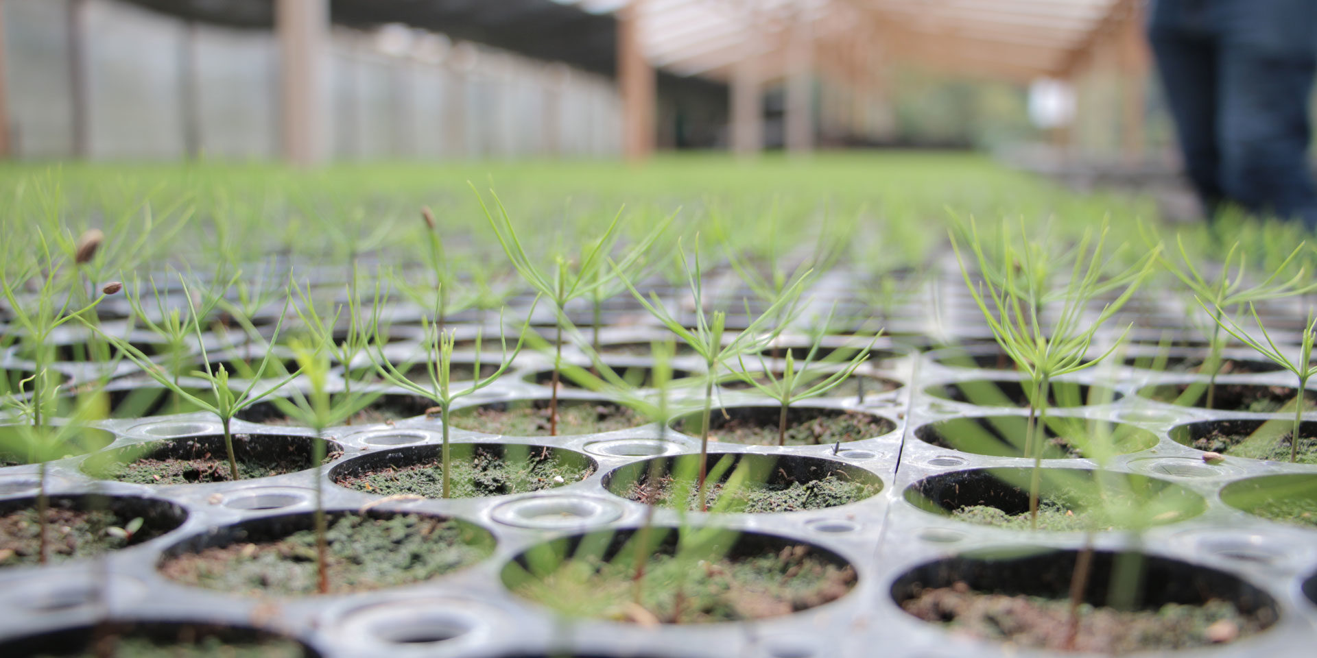 La FCFQ plante 20 000 arbres!