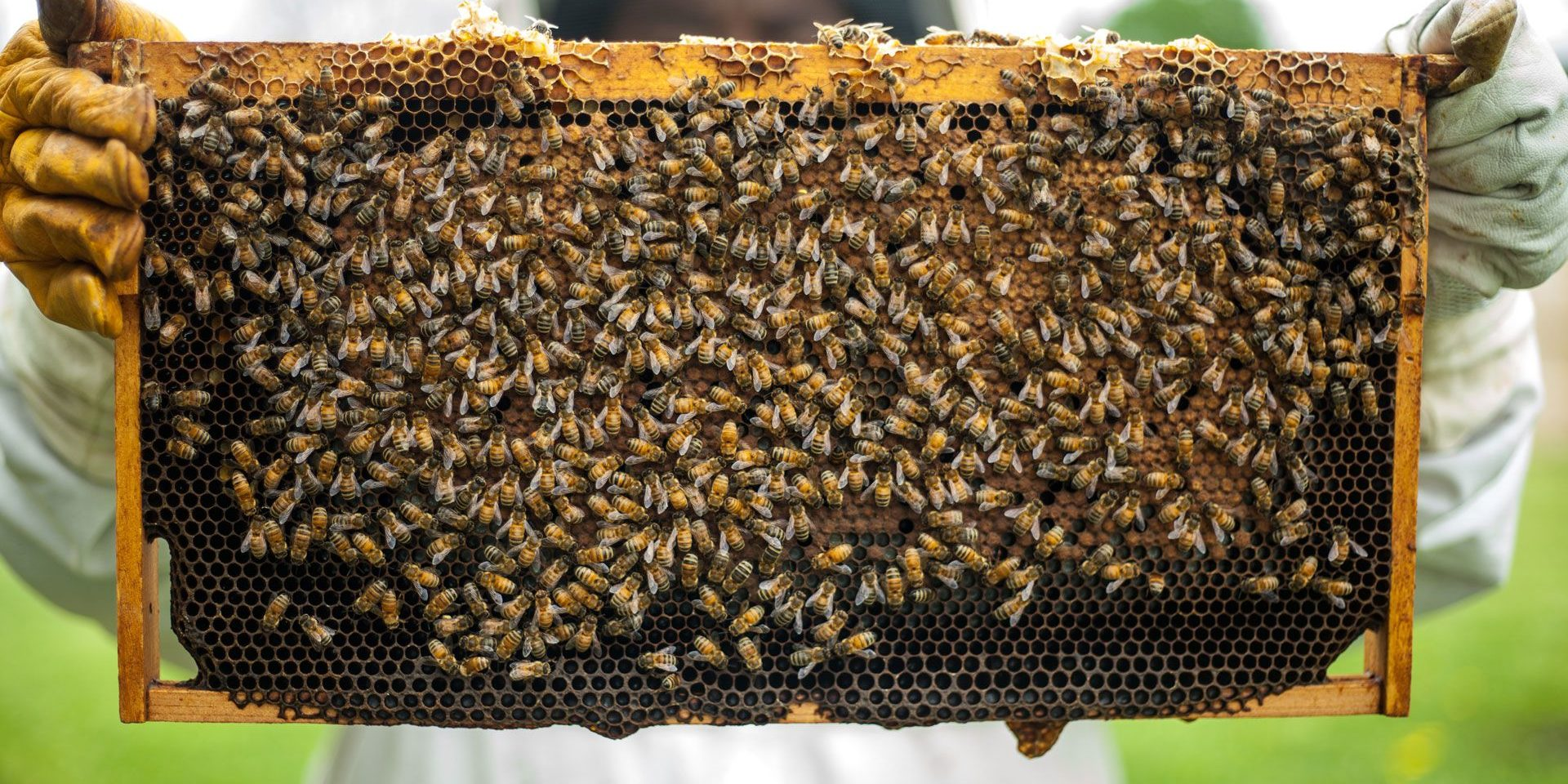 Des ruches pour des apicultrices du Sénégal !