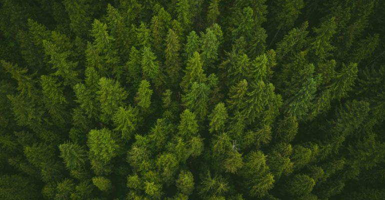 ¡Regale un bosque!