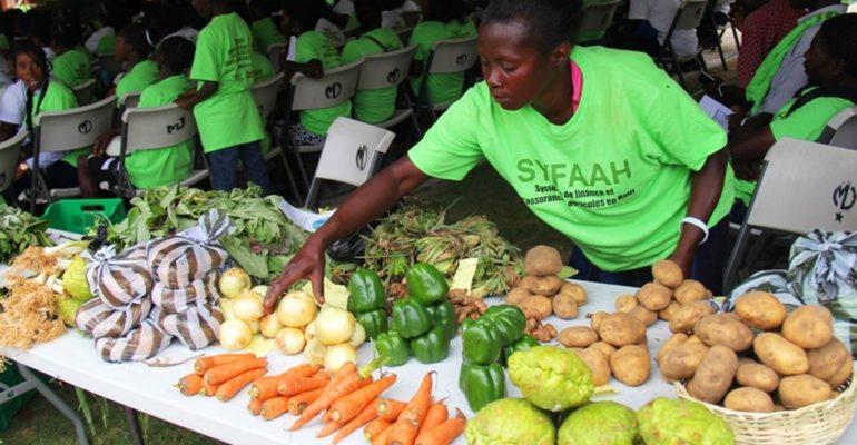 Des résultats prometteurs en financement et assurance agricoles en Haïti