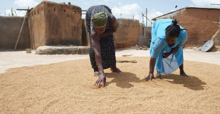 PROCED: Programme de développement de coopératives modèles inclusives et durables