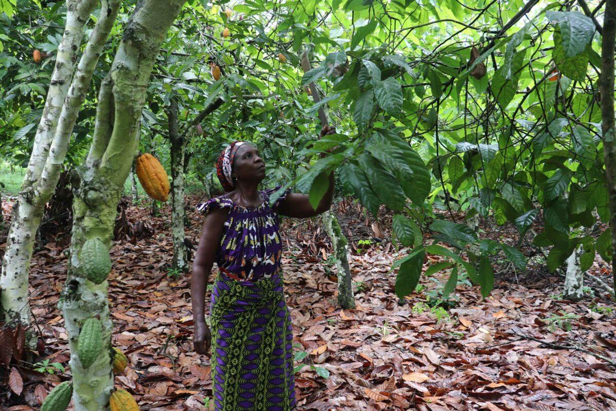Déforestation Côte d'Ivoire