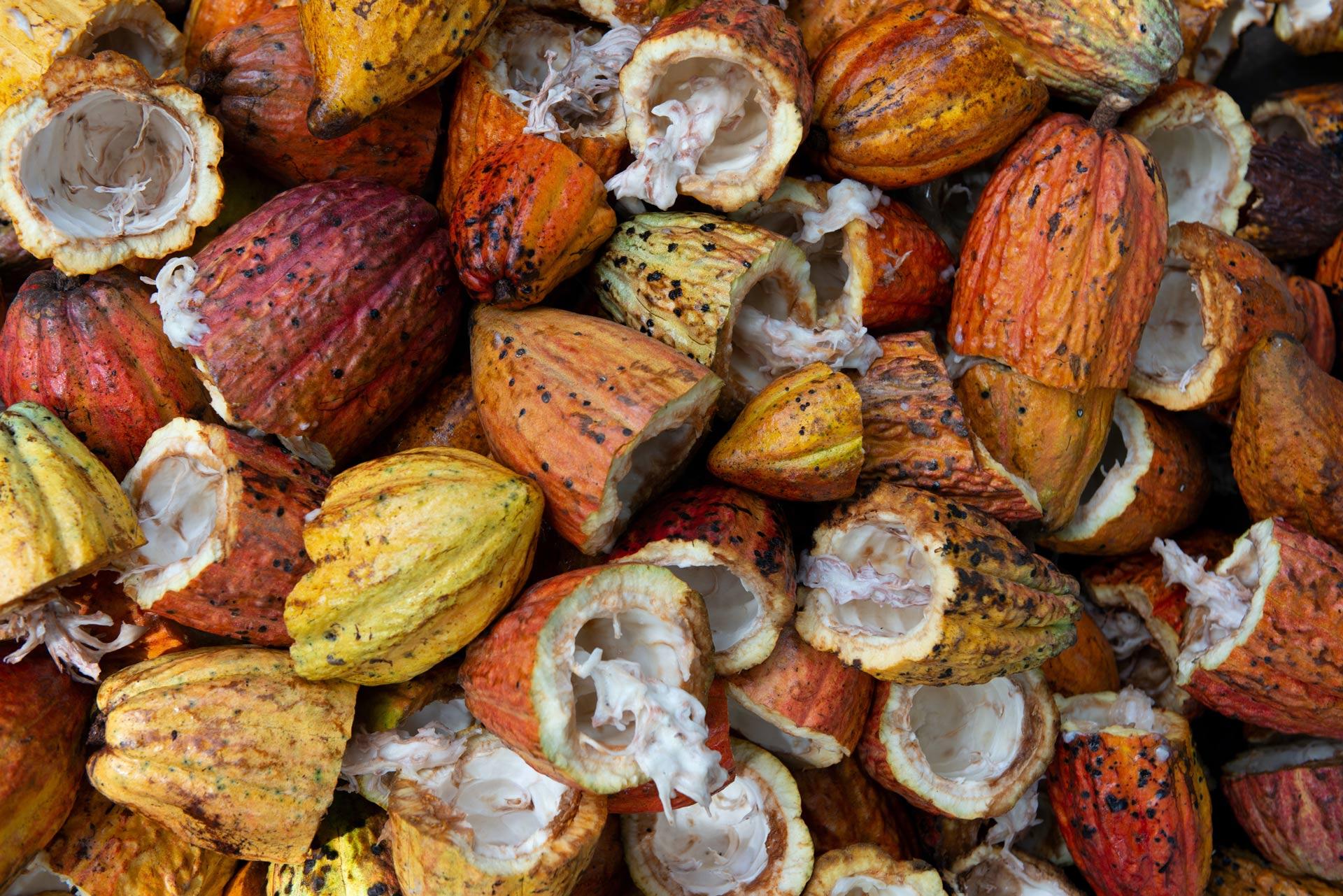 Donner pour aider les familles coopératrices ivoiriennes à préserver leurs forêts